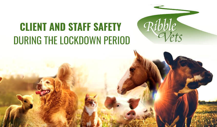 Client & Staff Safety during the Lockdown Period