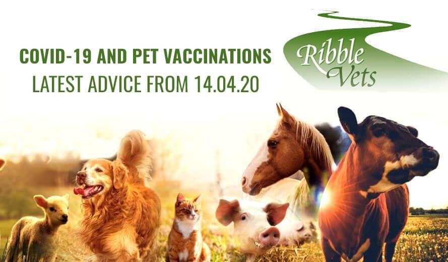 Covid-19 and Pet Vaccinations – Latest Advice from 14.04.20