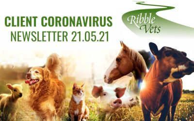 Client Coronavirus Newsletter